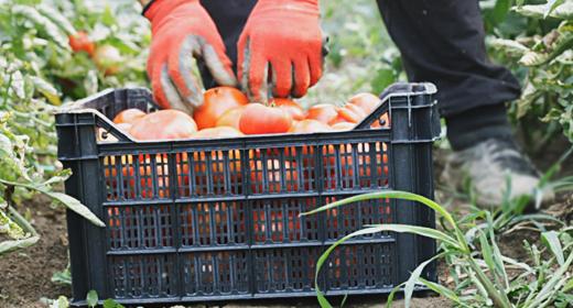 Harvest helper at working