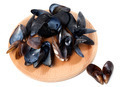 Shells of mussels on cutting board - PhotoDune Item for Sale