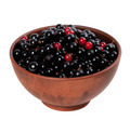 Blackcurrants with redcurrants in ceramic bowl - PhotoDune Item for Sale