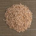 Circle of sesame seeds - PhotoDune Item for Sale