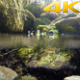 Natural Real Mossy Swamp Underwater 3 - VideoHive Item for Sale