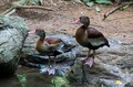 waterfowl in the wild near the water in the summer - PhotoDune Item for Sale