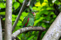 parrot sitting on a branch in nature close-up shot - PhotoDune Item for Sale