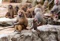 monkeys in the wild filmed close up - PhotoDune Item for Sale