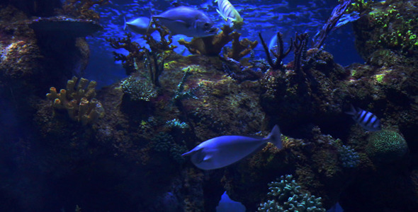 Blue Water Scenery With Exotic Fishes