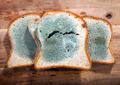 Moldy Bread - PhotoDune Item for Sale