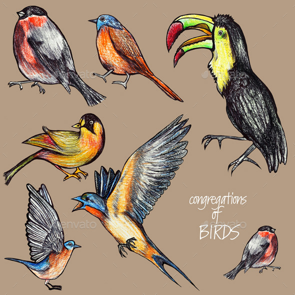 GraphicRiver Congregations of Birds 10941848