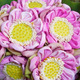 Folding lotus bouquet - PhotoDune Item for Sale