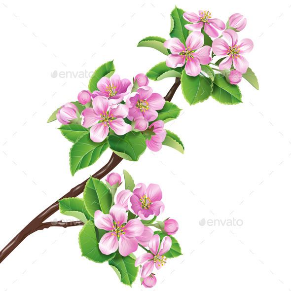 GraphicRiver Flowering Branch of Apple Tree 10945256