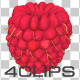 Raspberry V.2 - VideoHive Item for Sale