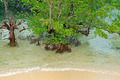 Tropical mangrove trees - PhotoDune Item for Sale