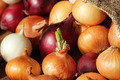 Different varieties of onions - PhotoDune Item for Sale