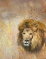 African Lion Portrait - PhotoDune Item for Sale
