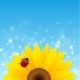 Sunflower and Ladybird on Blue Background - GraphicRiver Item for Sale