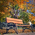 benches for rest in the autumn park - PhotoDune Item for Sale