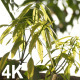 Bud Leaf - VideoHive Item for Sale