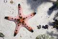 starfish - PhotoDune Item for Sale