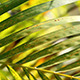 Green Leaf In Nature 433 - VideoHive Item for Sale