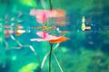 Underwater - PhotoDune Item for Sale