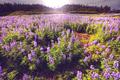 Alaska landscapes - PhotoDune Item for Sale