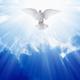 Holy spirit dove - PhotoDune Item for Sale