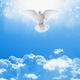 White dove in skies - PhotoDune Item for Sale