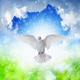 White dove flies in skies - PhotoDune Item for Sale