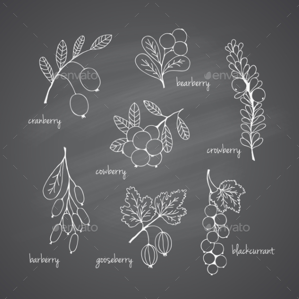 GraphicRiver Set of Garden Berries 10960976
