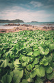 Green plants and sea nature landscape vintage - PhotoDune Item for Sale