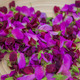 sweet peas gourmet cooking ingredients - PhotoDune Item for Sale
