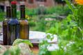garden party with wine and healthy food - PhotoDune Item for Sale