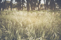 Blurred Nature Background with Instagram Style Filter - PhotoDune Item for Sale