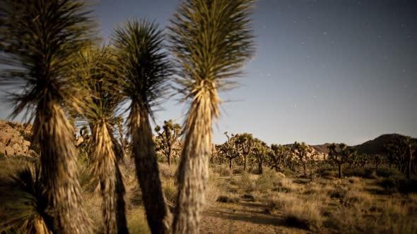 Yucca Plant At Night 3