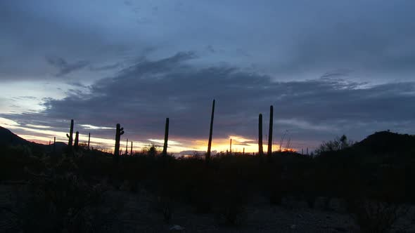 Desert Sunset With Cactus