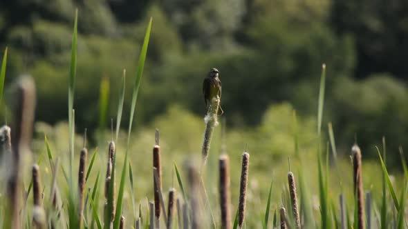 Bird On Reeds Point Reyes California 3
