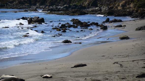 Elephant Seal Beach San Simeon California 2