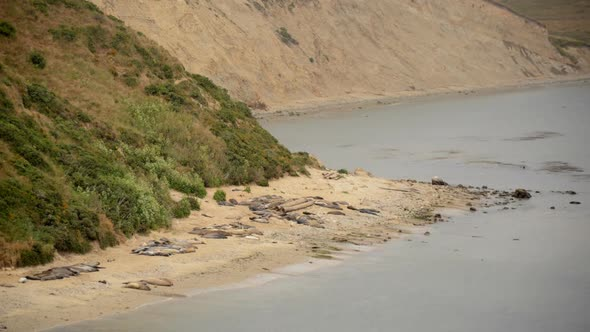 VideoHive Elephant Seals At Point Reyes California 2 10974926