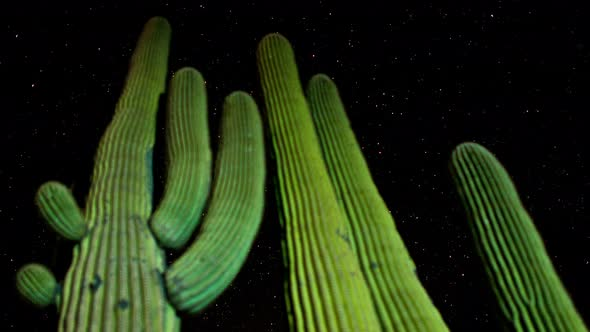 Desert Cactus At Night 1