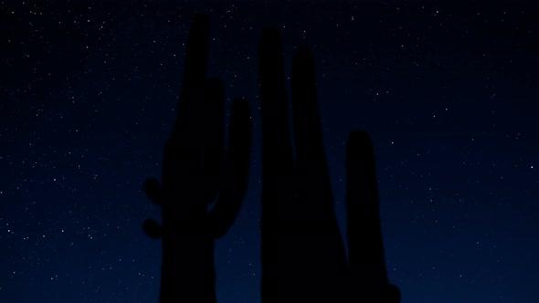 Desert Cactus At Night 2