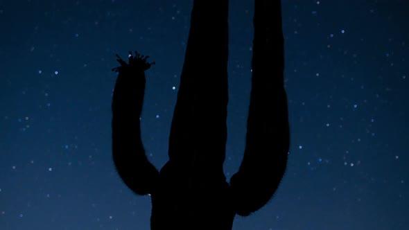 Night Desert Cactus With Star 2