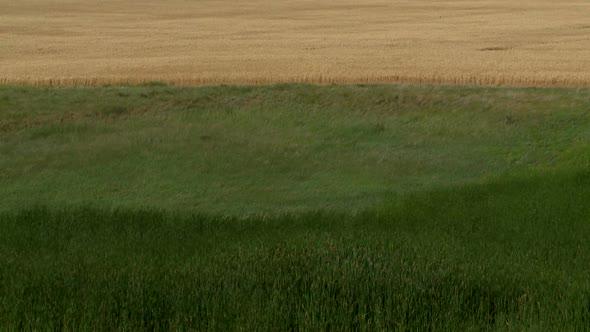 Flowinggrass 5-2011