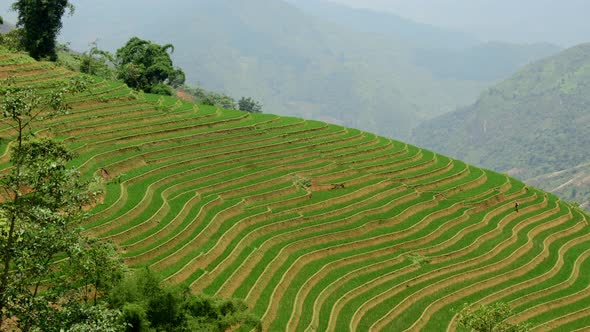 Scenic Rice Terraces In The Northern Mountains Of Vietnam Sapa Vietnam