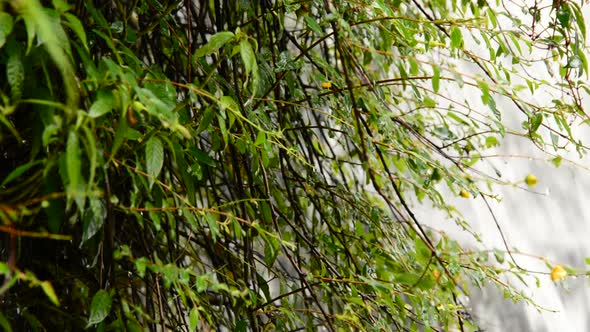 Raging Waterfall During Rainstorm Sapa Vietnam 9