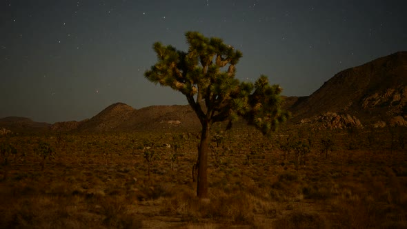 Joshua Tree And Aircraft And Stars In The Desert Sky