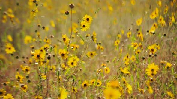Wild Flowers Clip 3