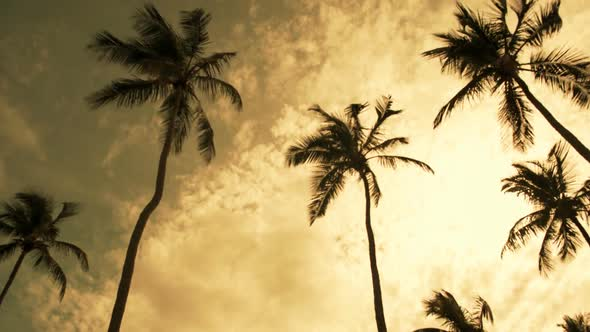 VideoHive Windswept Palms Trees 10976915