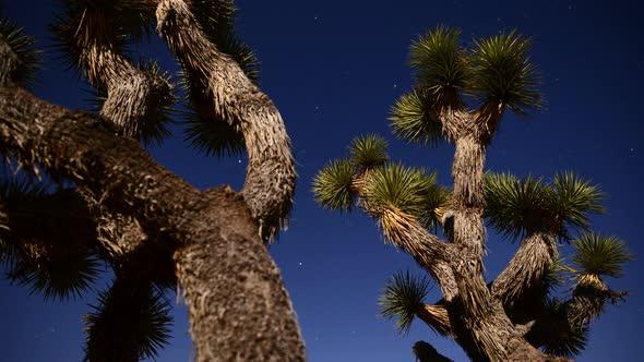 Joshua Tree At Night Full Moon Time Lapse Dolly Pan 4k 4
