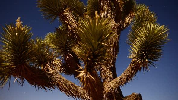 Joshua Tree At Night Full Moon Time Lapse Slider Pan 16