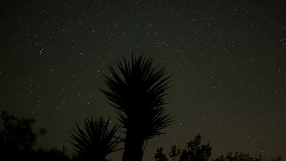 Star Lapse Of Yucca Plant