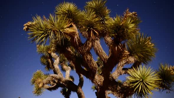 Joshua Tree At Night Full Moon Time Lapse Slider Pan 21